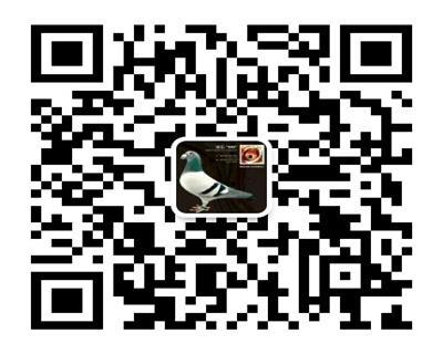 5000鸽业微信二维码