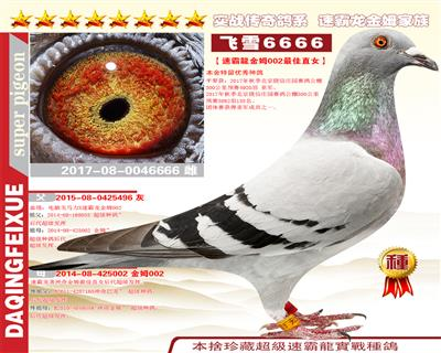 大庆飞雪6666