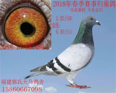 郭氏天马486