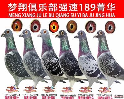 张掖梦翔俱乐部强速189菁华