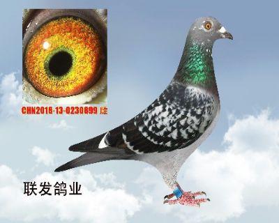 联发899   以售云南玉溪