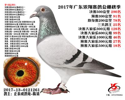 广东浓翔秋棚获奖鸽