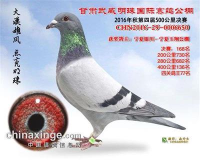 CHN2016-29-0006650