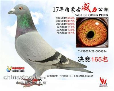 CHN2017-29-0006334