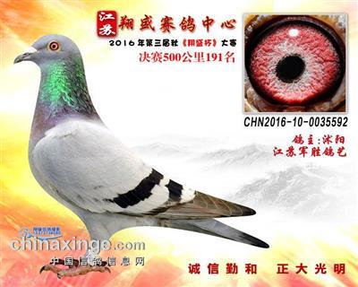16年江苏翔盛赛鸽中心决赛191名