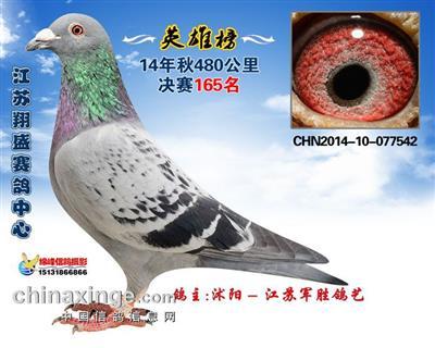 14年江苏翔盛赛鸽中心决赛165名
