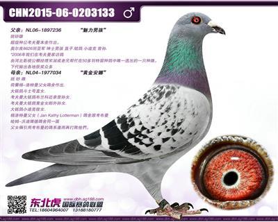 考夫曼�S金男孩(已售)