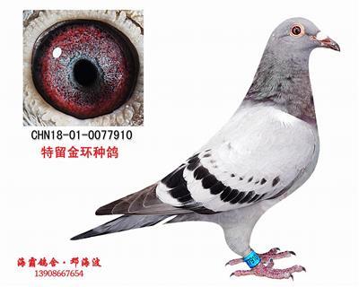 CHN18-01-0077910