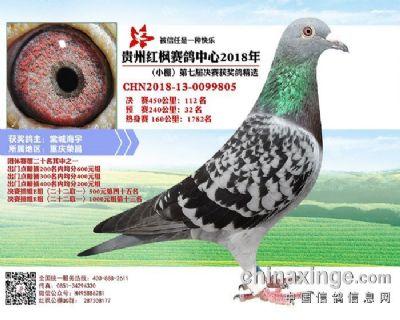 郭氏天马805鸽友拍卖