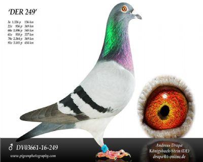 DV03661-16-249_main