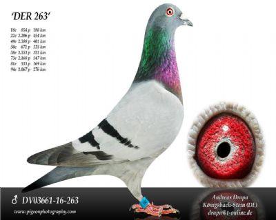 DV03661-16-263_main