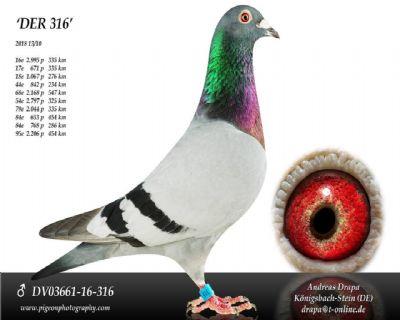 DV03661-16-316_main