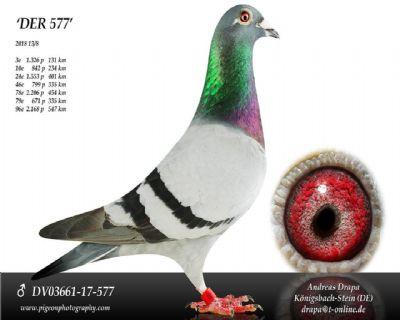 DV03661-17-577_main