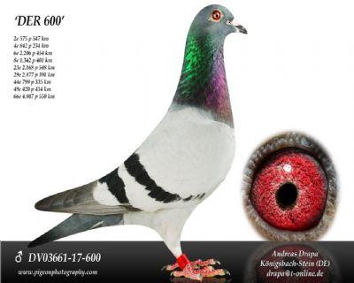 DV03661-17-600_main