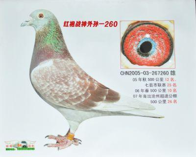 红袍战神外孙-260