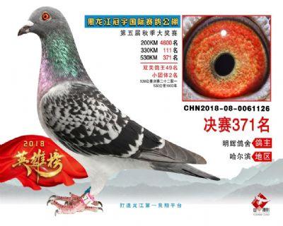 2018年黑龙江冠宇国际赛鸽公棚成绩鸽