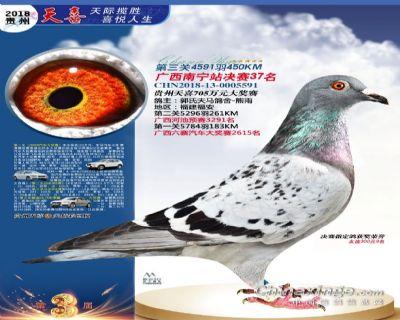 郭氏天马591鸽友拍卖