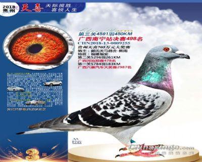 郭氏天马255鸽友拍卖