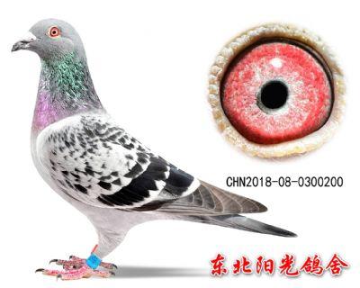 55、CHN2018-08-0300200副本