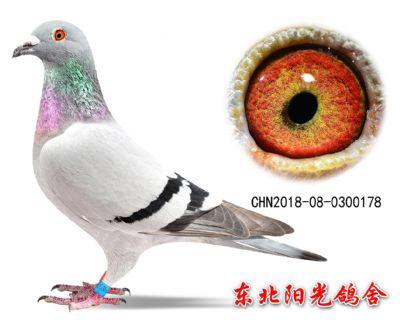 60、CHN2018-08-0300178副本