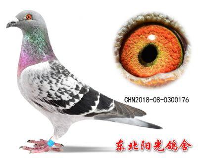 59、CHN2018-08-0300176副本