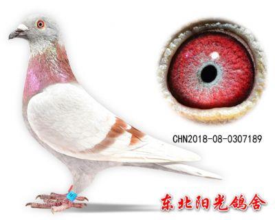 61、CHN2018-08-0307189