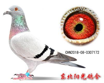 52、CHN2018-08-0307172副本