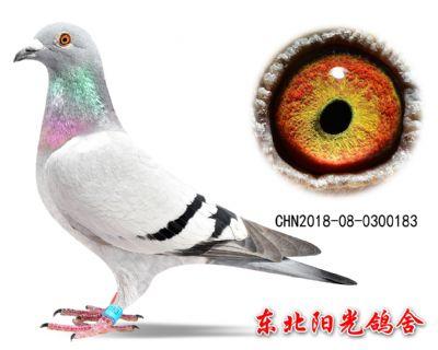 58、CHN2018-08-0300183副本