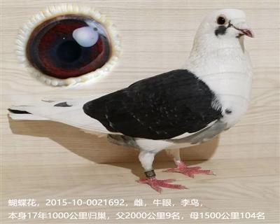 李鸟692
