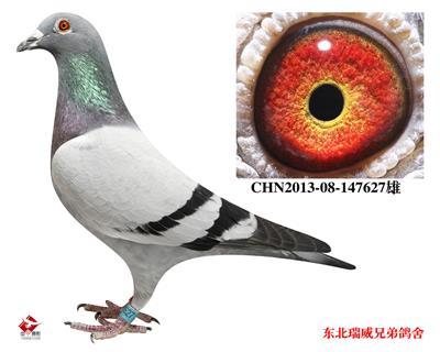 瑞威627(战神070直子)