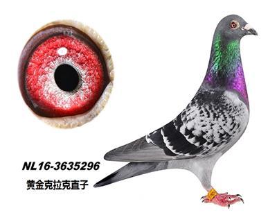 杨.拉莫斯5296