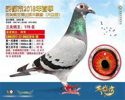 大众版/三关鸽王179名