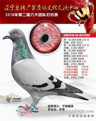 盘锦广翼团队鸽王77名