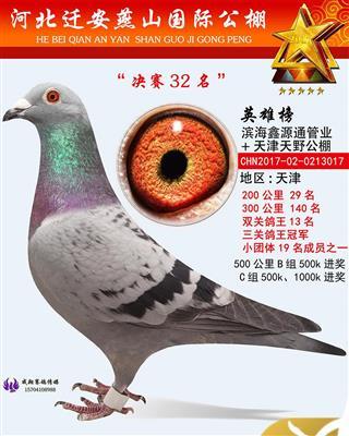 17年燕山国际公棚三关综合鸽王冠军