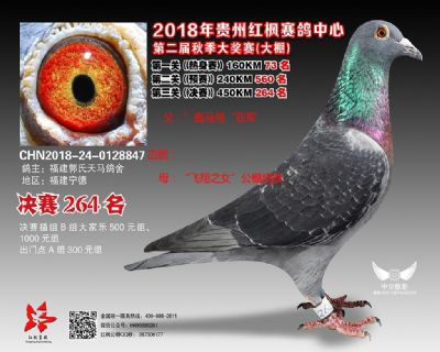 郭氏天马847鸽友拍卖