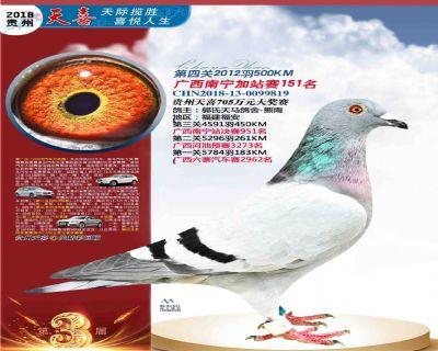 郭氏天马819鸽友拍卖