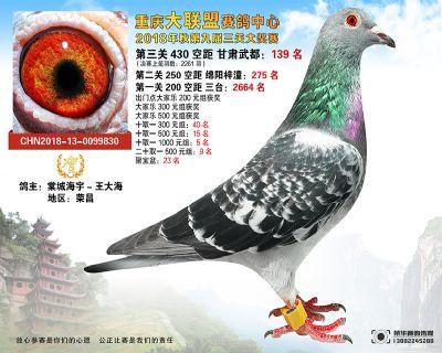 郭氏天马830鸽友拍卖