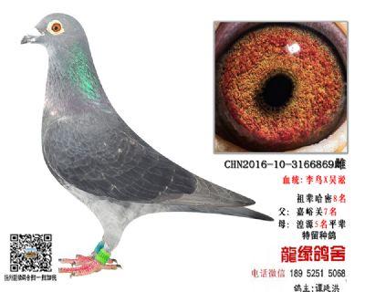 超远程老国血李鸟吴淞5.5
