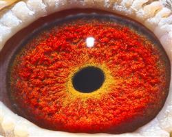 漂亮的眼砂
