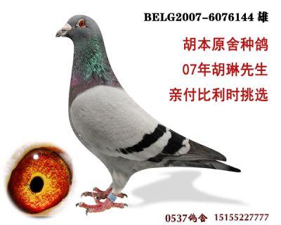 胡本原舍 6076144-雄