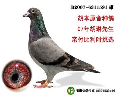 胡本原舍 6311591-