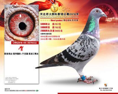 冠宇国际 中信网铭鸽展厅 www.ag188.com