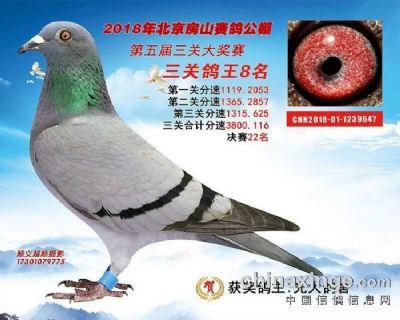 房山(22名三关鸽王8名)2018-01-1239647