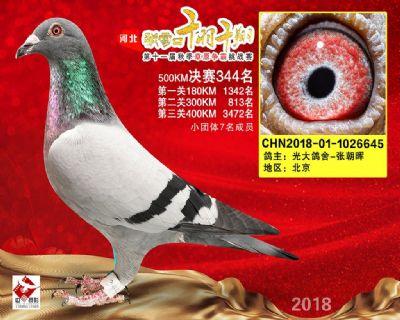 千羽千翔(344名)2018-01-1026645