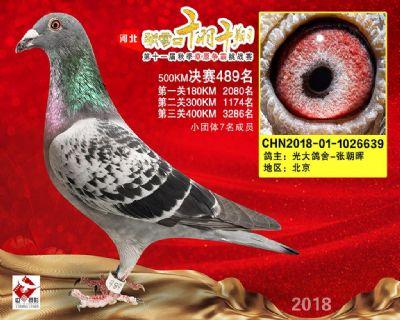 千羽千翔(489名)2018-01-1026639