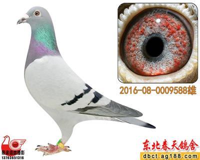 【春天】史多西斯9588