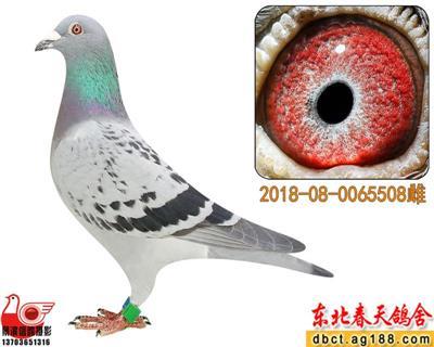 【春天】冠宇加站赛219名