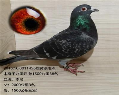 李鸟456