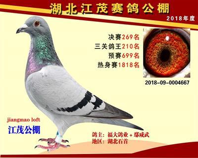 鄂州市葛店江茂赛鸽中心决赛269名!!