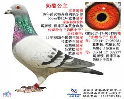 武汉金诚赛鸽交流中心